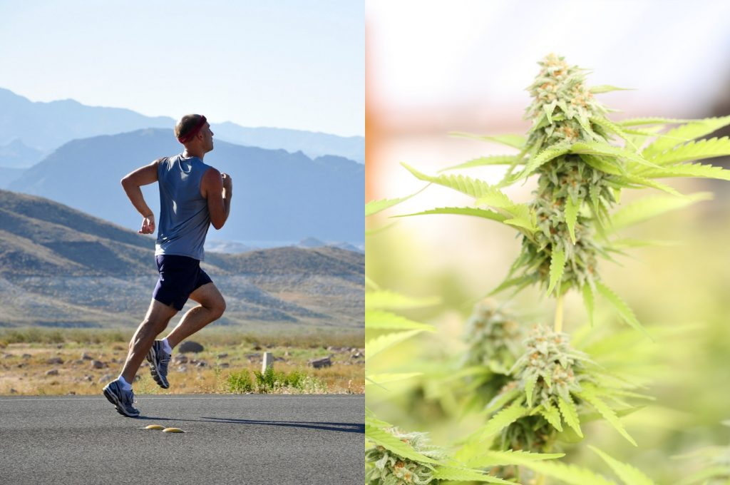 Runner and Cannabis