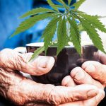 Why Using Cannabis Can Help You Age Gracefully