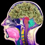 What Happens to the Brain When You Use Cannabis for a Long Time
