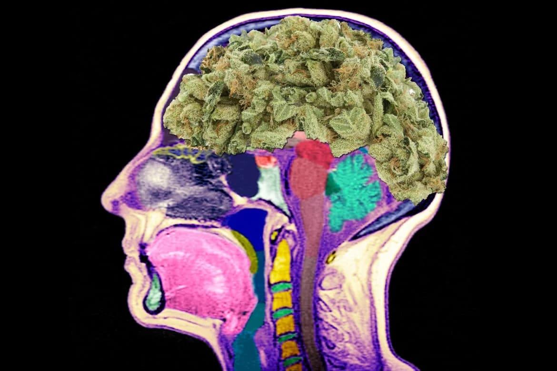 Влияние марихуаны на мозг человека купить семечку конопли в спб