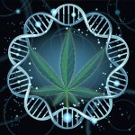 Genetically Modified Cannabis Coming Soon